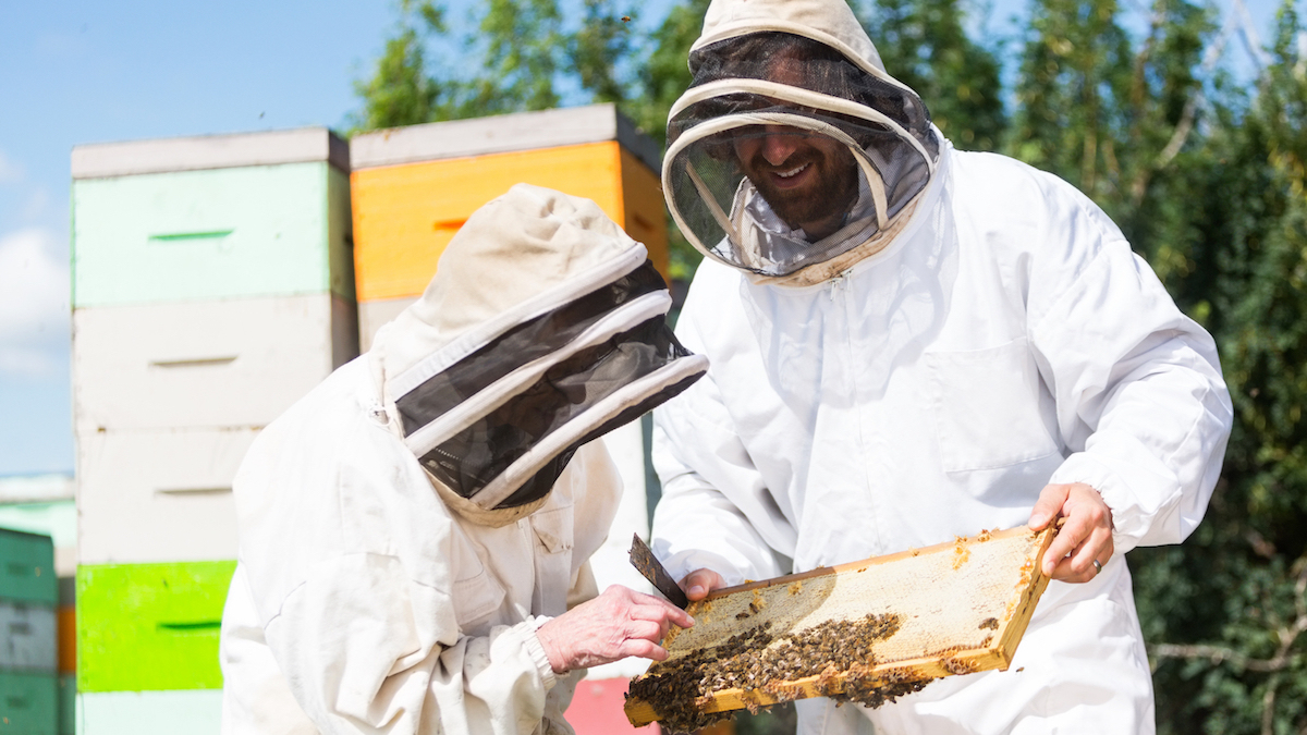 Some good news for bees: EPA bans 12 bee-killing pesticides